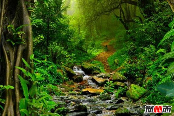 亚马逊雨林现状如何?亚马逊雨林的十大恐怖之处