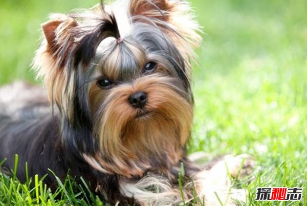 狗智商相当于人几岁?新手养狗必须知道的十大事情