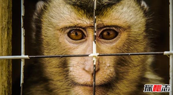 吃肉是否过于残忍?人类对动物的十大残忍行为