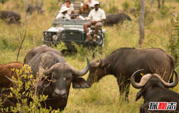 偷猎的十大危害 每15分钟非法猎杀一头大象(20年灭绝)